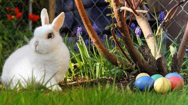 2019 Easter egg hunts and events