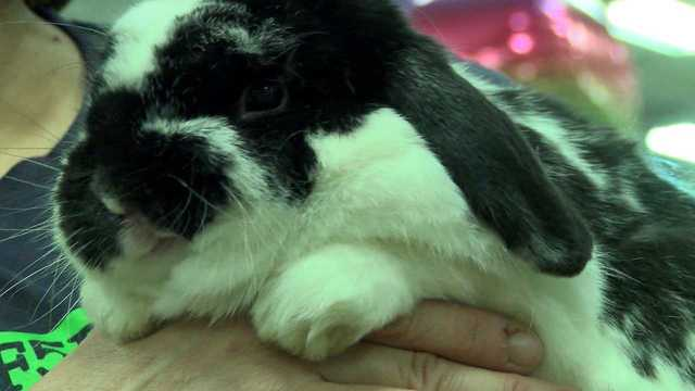 Local charities bring adoptable animals to Boardman for National Adoption Weekend